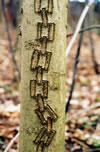 Tree Graffiti: Chain
