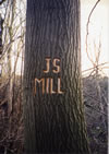 Tree Graffiti: Mill